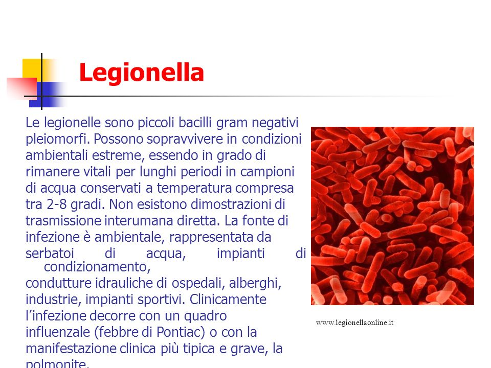 Legionella Le legionelle sono piccoli bacilli gram negativi pleiomorfi. Possono sopravvivere in condizioni ambientali estreme, essendo in grado di rim