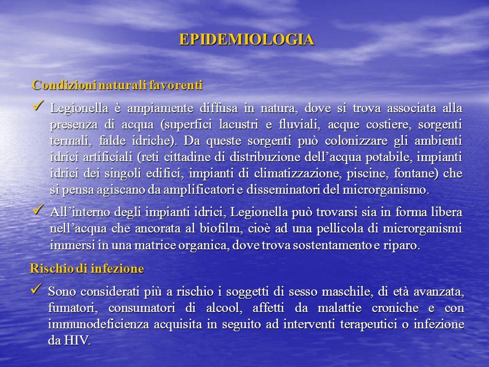 EPIDEMIOLOGIA Agente eziologico Attualmente al genere Legionella appartengono 48 specie, tra cui L.pneumophila è la più diffusa (90% delle infezioni).