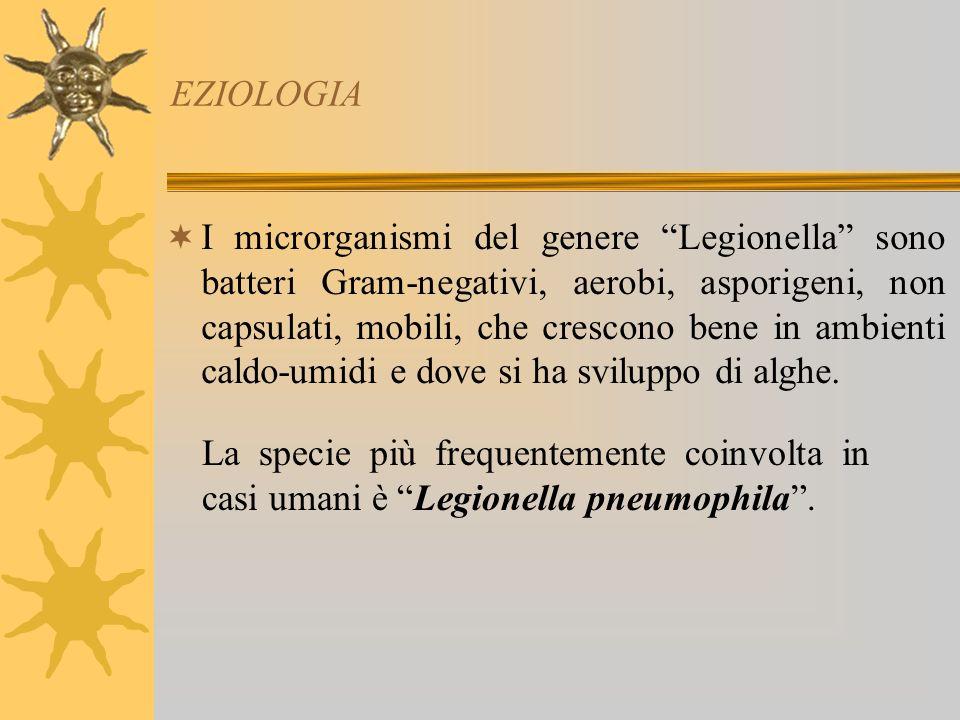 EZIOLOGIA I microrganismi del genere Legionella sono batteri Gram-negativi, aerobi, asporigeni, non capsulati, mobili, che crescono bene in ambienti caldo-umidi e dove si ha sviluppo di alghe.