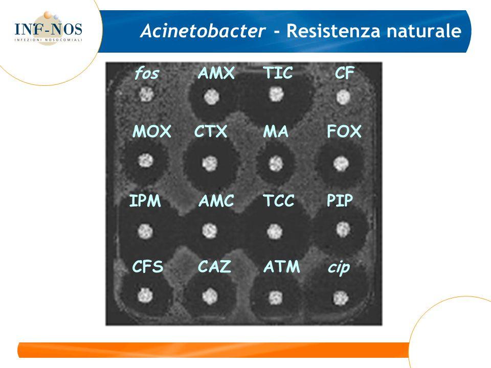fosAMXTICCF MOXCTXMAFOX IPMAMCTCCPIP CFSCAZATMcip Acinetobacter - Resistenza naturale