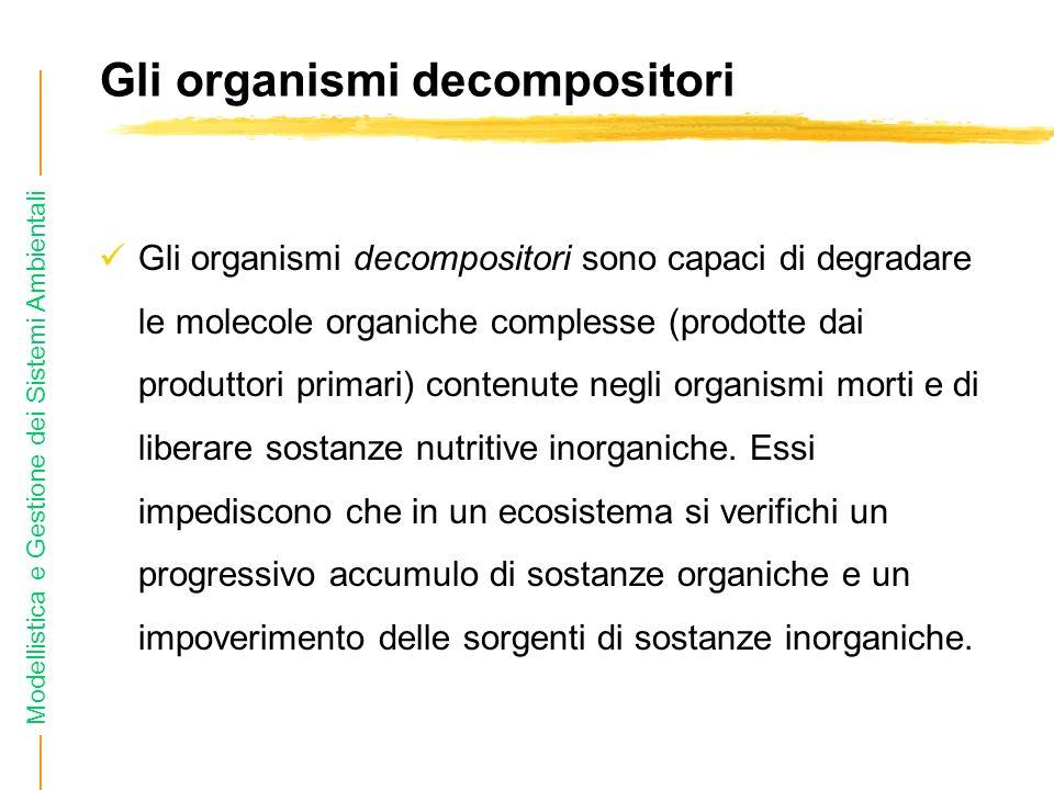 Modellistica e Gestione dei Sistemi Ambientali Gli organismi decompositori Gli organismi decompositori sono capaci di degradare le molecole organiche complesse (prodotte dai produttori primari) contenute negli organismi morti e di liberare sostanze nutritive inorganiche.