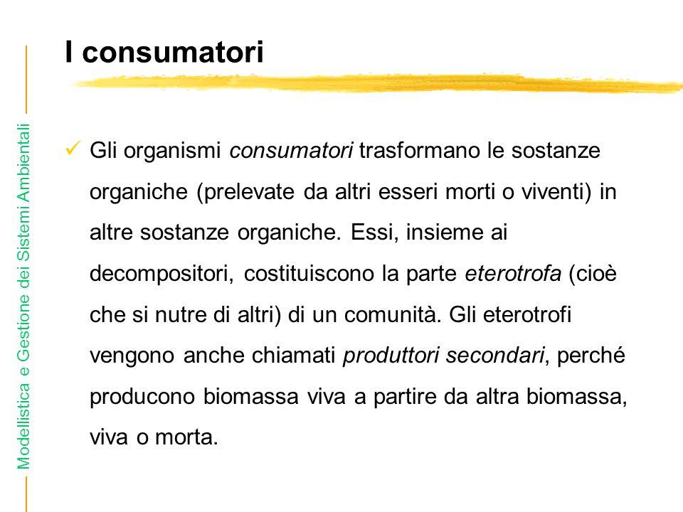 Modellistica e Gestione dei Sistemi Ambientali I consumatori Gli organismi consumatori trasformano le sostanze organiche (prelevate da altri esseri morti o viventi) in altre sostanze organiche.