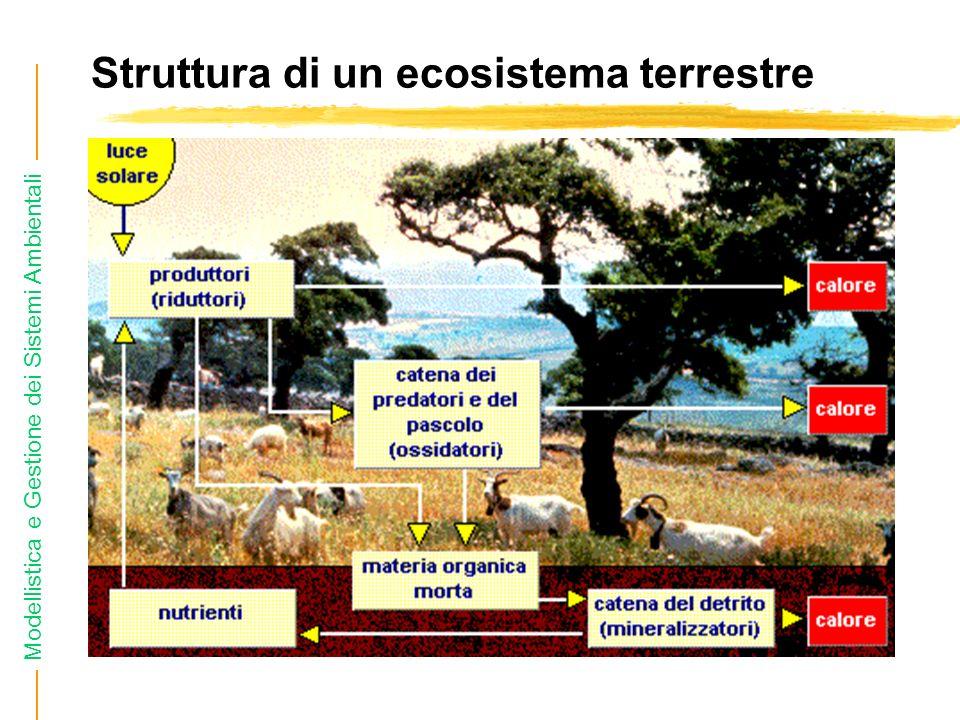 Modellistica e Gestione dei Sistemi Ambientali Struttura di un ecosistema terrestre