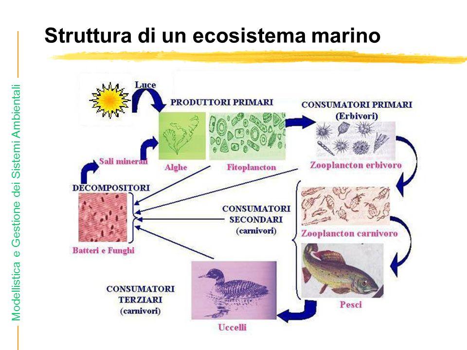 Modellistica e Gestione dei Sistemi Ambientali Struttura di un ecosistema marino