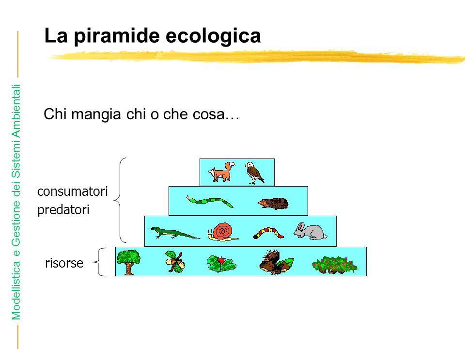 Modellistica e Gestione dei Sistemi Ambientali La piramide ecologica Chi mangia chi o che cosa… risorse consumatori predatori