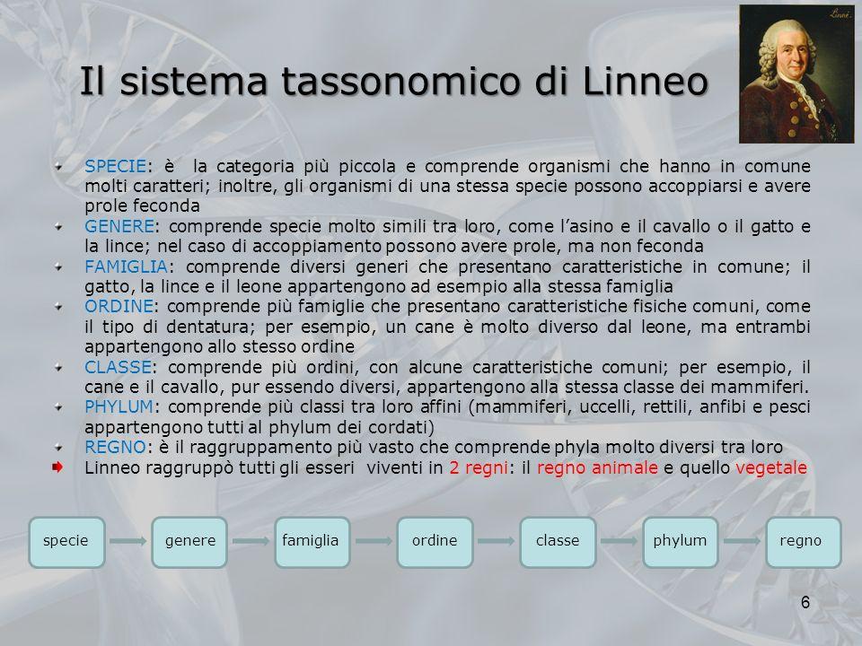 Il sistema tassonomico di Linneo Il sistema tassonomico di Linneo SPECIE SPECIE: è la categoria più piccola e comprende organismi che hanno in comune