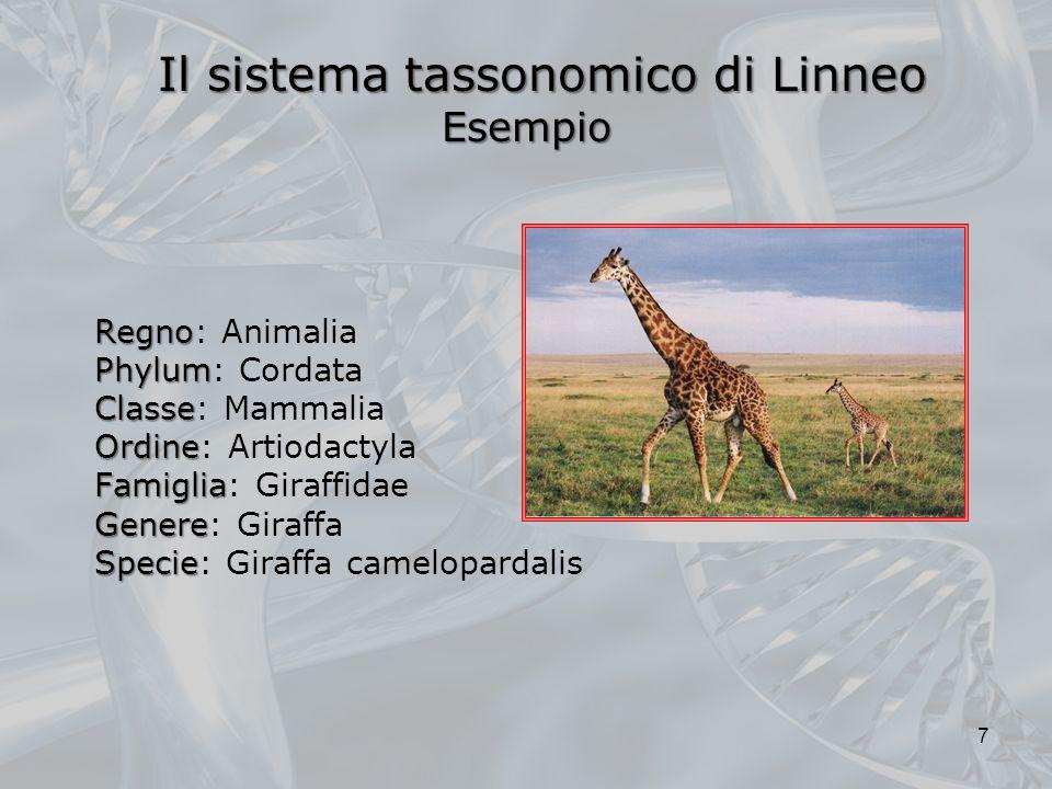 Il sistema tassonomico di Linneo Esempio Il sistema tassonomico di Linneo Esempio Regno Regno: Animalia Phylum Phylum: Cordata Classe Classe: Mammalia