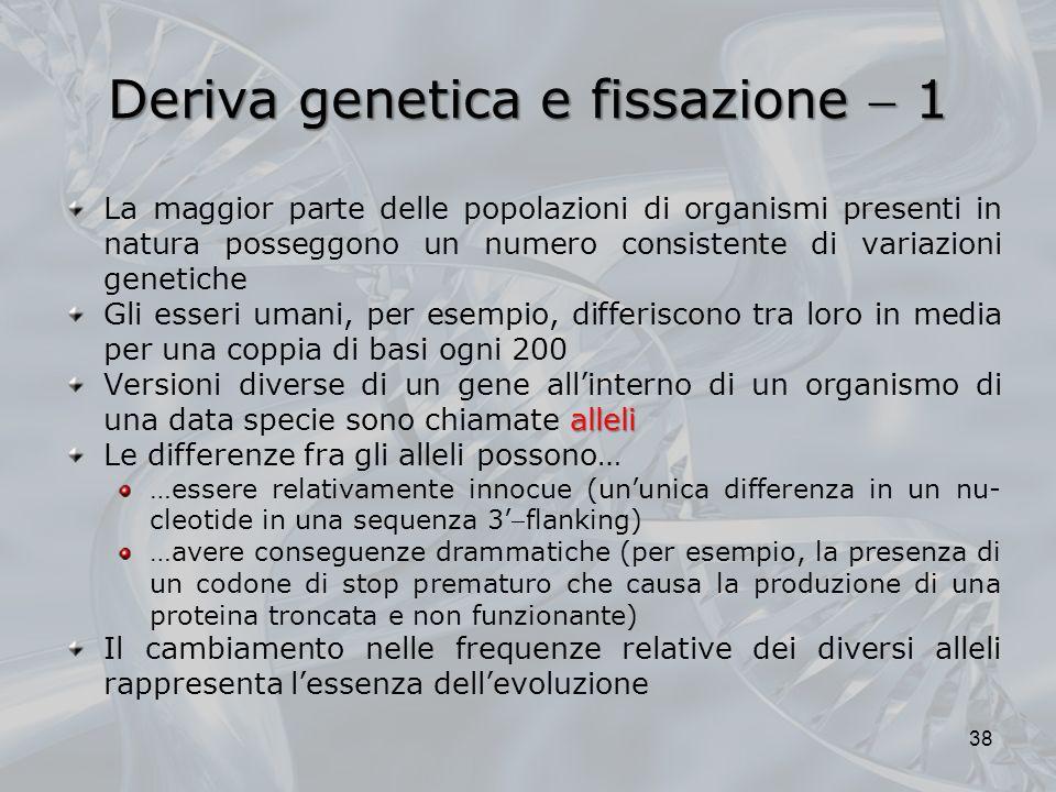 Deriva genetica e fissazione 1 La maggior parte delle popolazioni di organismi presenti in natura posseggono un numero consistente di variazioni genetiche Gli esseri umani, per esempio, differiscono tra loro in media per una coppia di basi ogni 200 alleli Versioni diverse di un gene allinterno di un organismo di una data specie sono chiamate alleli Le differenze fra gli alleli possono… …essere relativamente innocue (ununica differenza in un nu- cleotide in una sequenza 3flanking) …avere conseguenze drammatiche (per esempio, la presenza di un codone di stop prematuro che causa la produzione di una proteina troncata e non funzionante) Il cambiamento nelle frequenze relative dei diversi alleli rappresenta lessenza dellevoluzione 38