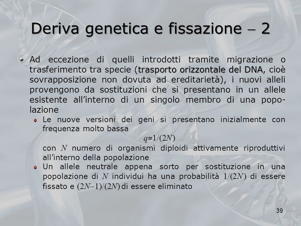 Deriva genetica e fissazione 2 trasporto orizzontale del DNA Ad eccezione di quelli introdotti tramite migrazione o trasferimento tra specie (trasporto orizzontale del DNA, cioè sovrapposizione non dovuta ad ereditarietà), i nuovi alleli provengono da sostituzioni che si presentano in un allele esistente allinterno di un singolo membro di una popo- lazione Le nuove versioni dei geni si presentano inizialmente con frequenza molto bassa q 1 (2N ) con N numero di organismi diploidi attivamente riproduttivi allinterno della popolazione Un allele neutrale appena sorto per sostituzione in una popolazione di N individui ha una probabilità 1/(2N ) di essere fissato e (2N 1)/(2N ) di essere eliminato 39