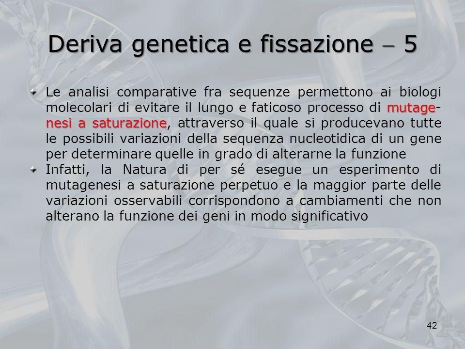 Deriva genetica e fissazione 5 mutage nesi a saturazione Le analisi comparative fra sequenze permettono ai biologi molecolari di evitare il lungo e faticoso processo di mutage- nesi a saturazione, attraverso il quale si producevano tutte le possibili variazioni della sequenza nucleotidica di un gene per determinare quelle in grado di alterarne la funzione Infatti, la Natura di per sé esegue un esperimento di mutagenesi a saturazione perpetuo e la maggior parte delle variazioni osservabili corrispondono a cambiamenti che non alterano la funzione dei geni in modo significativo 42
