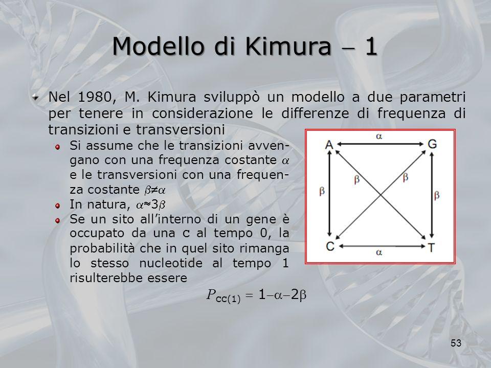 Modello di Kimura 1 Si assume che le transizioni avven- gano con una frequenza costante e le transversioni con una frequen- za costante In natura, 3 Se un sito allinterno di un gene è occupato da una C al tempo 0, la probabilità che in quel sito rimanga lo stesso nucleotide al tempo 1 risulterebbe essere 53 P CC (1) 12 Nel 1980, M.