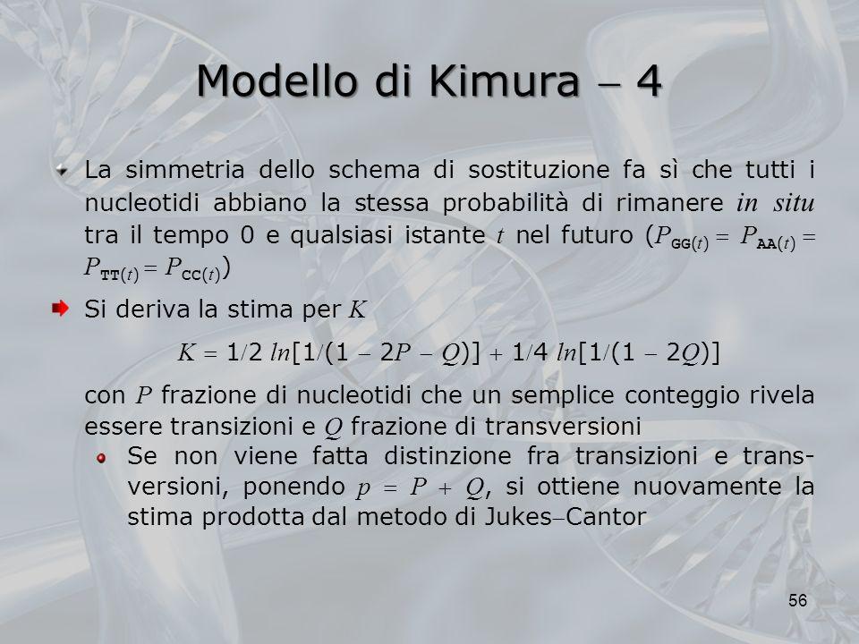Modello di Kimura 4 56 La simmetria dello schema di sostituzione fa sì che tutti i nucleotidi abbiano la stessa probabilità di rimanere in situ tra il tempo 0 e qualsiasi istante t nel futuro ( P GG ( t ) P AA ( t ) P TT ( t ) P CC ( t ) ) Si deriva la stima per K K 12 ln [1(1 2 P Q )] 14 ln [1(1 2 Q )] con P frazione di nucleotidi che un semplice conteggio rivela essere transizioni e Q frazione di transversioni Se non viene fatta distinzione fra transizioni e trans- versioni, ponendo p P Q, si ottiene nuovamente la stima prodotta dal metodo di JukesCantor