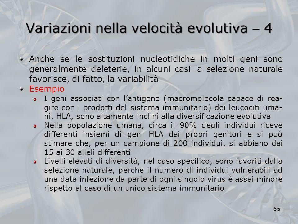 Variazioni nella velocità evolutiva 4 65 Anche se le sostituzioni nucleotidiche in molti geni sono generalmente deleterie, in alcuni casi la selezione naturale favorisce, di fatto, la variabilitàEsempio I geni associati con lantigene (macromolecola capace di rea- gire con i prodotti del sistema immunitario) dei leucociti uma- ni, HLA, sono altamente inclini alla diversificazione evolutiva Nella popolazione umana, circa il 90% degli individui riceve differenti insiemi di geni HLA dai propri genitori e si può stimare che, per un campione di 200 individui, si abbiano dai 15 ai 30 alleli differenti Livelli elevati di diversità, nel caso specifico, sono favoriti dalla selezione naturale, perché il numero di individui vulnerabili ad una data infezione da parte di ogni singolo virus è assai minore rispetto al caso di un unico sistema immunitario