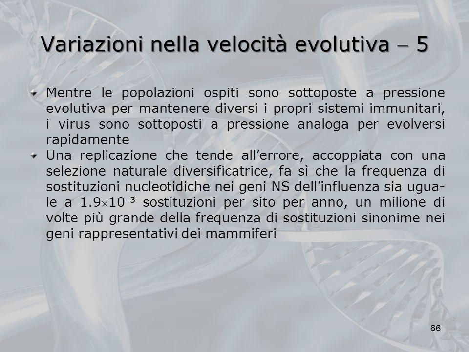 Variazioni nella velocità evolutiva 5 66 Mentre le popolazioni ospiti sono sottoposte a pressione evolutiva per mantenere diversi i propri sistemi immunitari, i virus sono sottoposti a pressione analoga per evolversi rapidamente Una replicazione che tende allerrore, accoppiata con una selezione naturale diversificatrice, fa sì che la frequenza di sostituzioni nucleotidiche nei geni NS dellinfluenza sia ugua- le a 1.9103 sostituzioni per sito per anno, un milione di volte più grande della frequenza di sostituzioni sinonime nei geni rappresentativi dei mammiferi