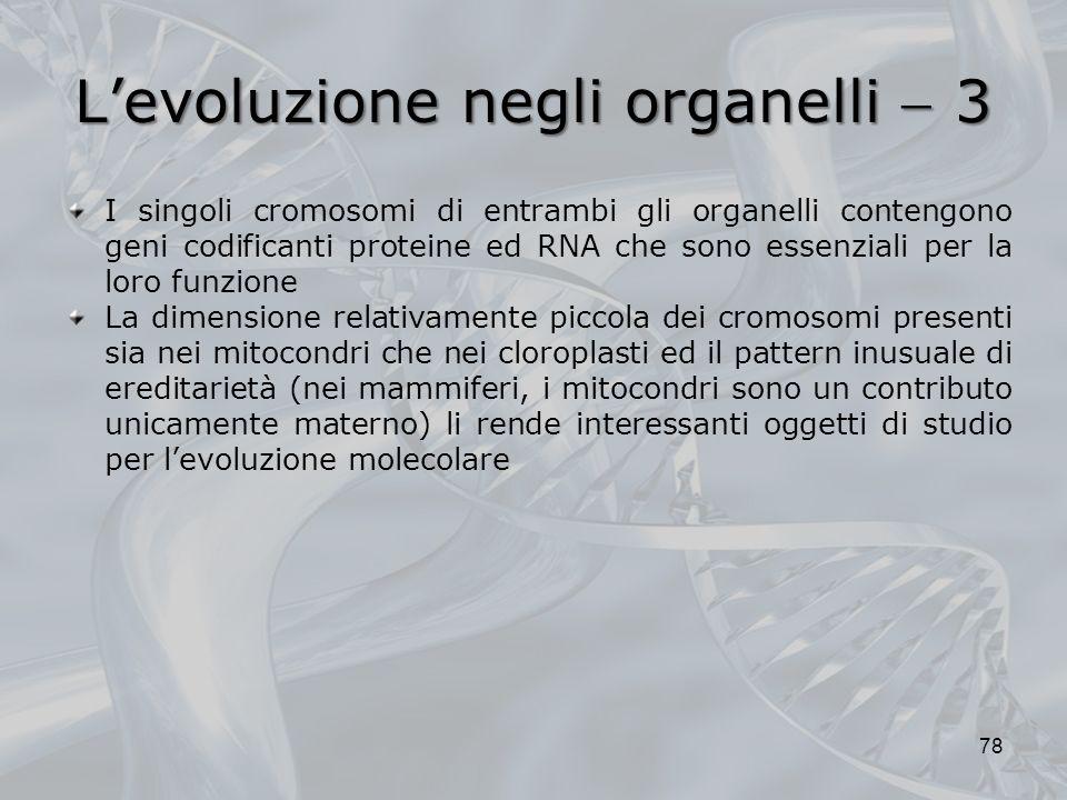 Levoluzione negli organelli 3 I singoli cromosomi di entrambi gli organelli contengono geni codificanti proteine ed RNA che sono essenziali per la loro funzione La dimensione relativamente piccola dei cromosomi presenti sia nei mitocondri che nei cloroplasti ed il pattern inusuale di ereditarietà (nei mammiferi, i mitocondri sono un contributo unicamente materno) li rende interessanti oggetti di studio per levoluzione molecolare 78