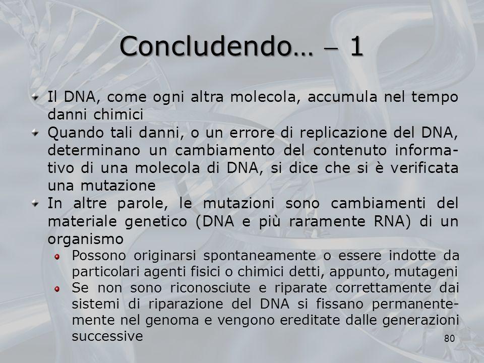 Concludendo… 1 Il DNA, come ogni altra molecola, accumula nel tempo danni chimici Quando tali danni, o un errore di replicazione del DNA, determinano un cambiamento del contenuto informa- tivo di una molecola di DNA, si dice che si è verificata una mutazione In altre parole, le mutazioni sono cambiamenti del materiale genetico (DNA e più raramente RNA) di un organismo Possono originarsi spontaneamente o essere indotte da particolari agenti fisici o chimici detti, appunto, mutageni Se non sono riconosciute e riparate correttamente dai sistemi di riparazione del DNA si fissano permanente- mente nel genoma e vengono ereditate dalle generazioni successive 80