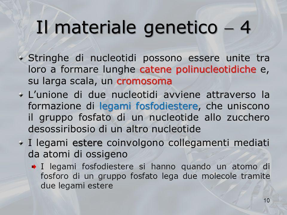 Il materiale genetico 4 catene polinucleotidiche cromosoma Stringhe di nucleotidi possono essere unite tra loro a formare lunghe catene polinucleotidi