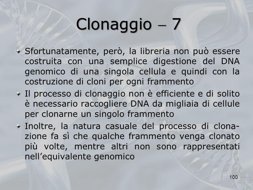 Clonaggio 7 Sfortunatamente, però, la libreria non può essere costruita con una semplice digestione del DNA genomico di una singola cellula e quindi c