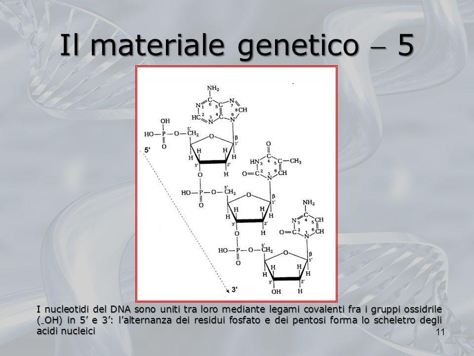 Il materiale genetico 5 I nucleotidi del DNA sono uniti tra loro mediante legami covalenti fra i gruppi ossidrile ( OH) in 5 e 3: lalternanza dei resi