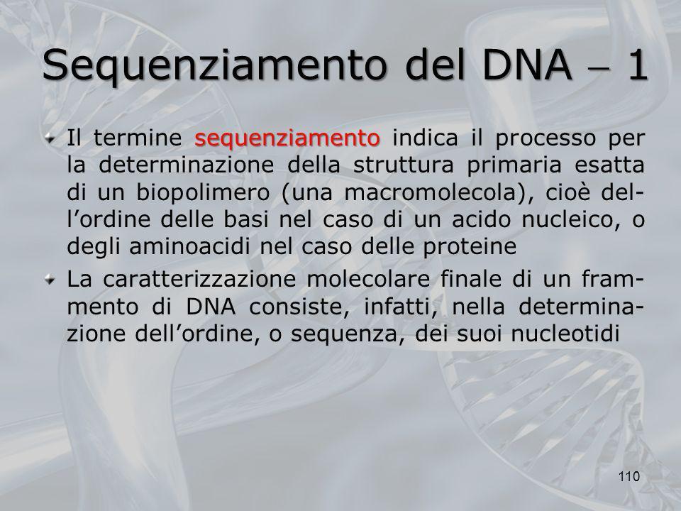 Sequenziamento del DNA 1 sequenziamento Il termine sequenziamento indica il processo per la determinazione della struttura primaria esatta di un biopo