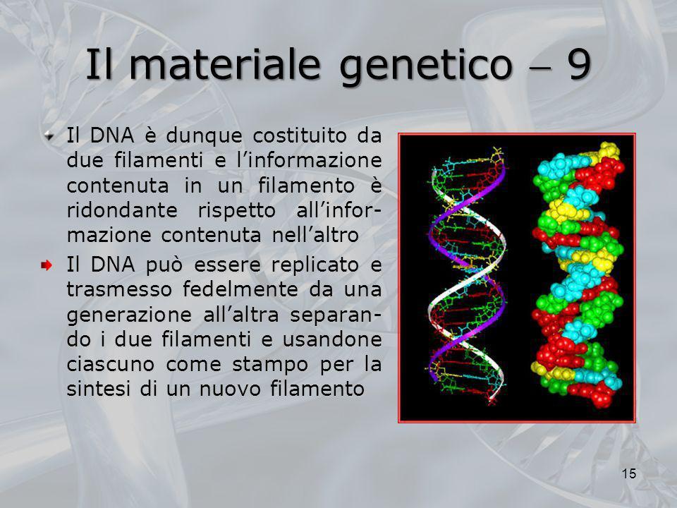 Il materiale genetico 9 Il DNA è dunque costituito da due filamenti e linformazione contenuta in un filamento è ridondante rispetto allinfor- mazione
