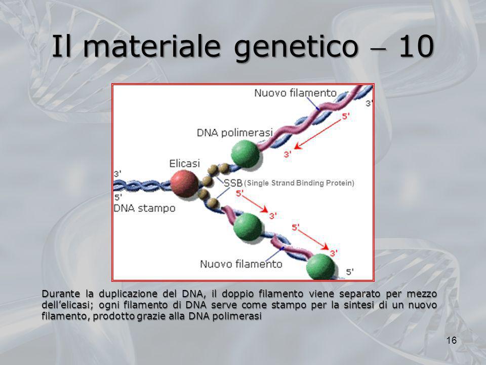 Il materiale genetico 10 Durante la duplicazione del DNA, il doppio filamento viene separato per mezzo dellelicasi; ogni filamento di DNA serve come s