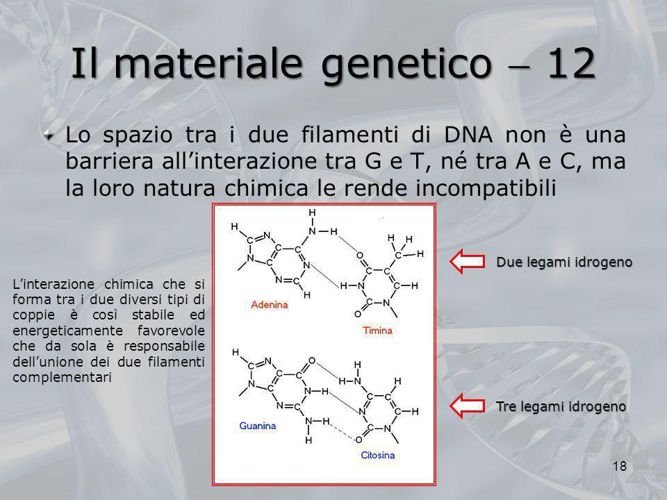 Il materiale genetico 12 Lo spazio tra i due filamenti di DNA non è una barriera allinterazione tra G e T, né tra A e C, ma la loro natura chimica le