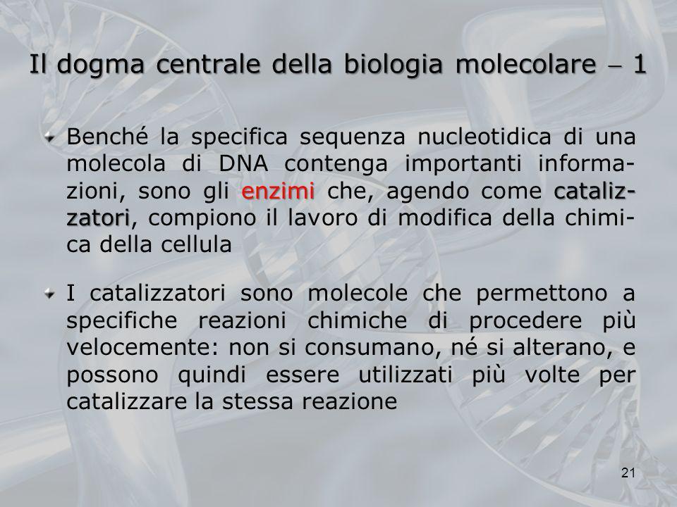 Il dogma centrale della biologia molecolare 1 enzimicataliz- zatori Benché la specifica sequenza nucleotidica di una molecola di DNA contenga importan