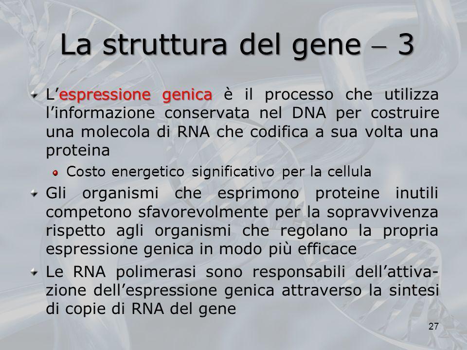 La struttura del gene 3 espressione genica Lespressione genica è il processo che utilizza linformazione conservata nel DNA per costruire una molecola