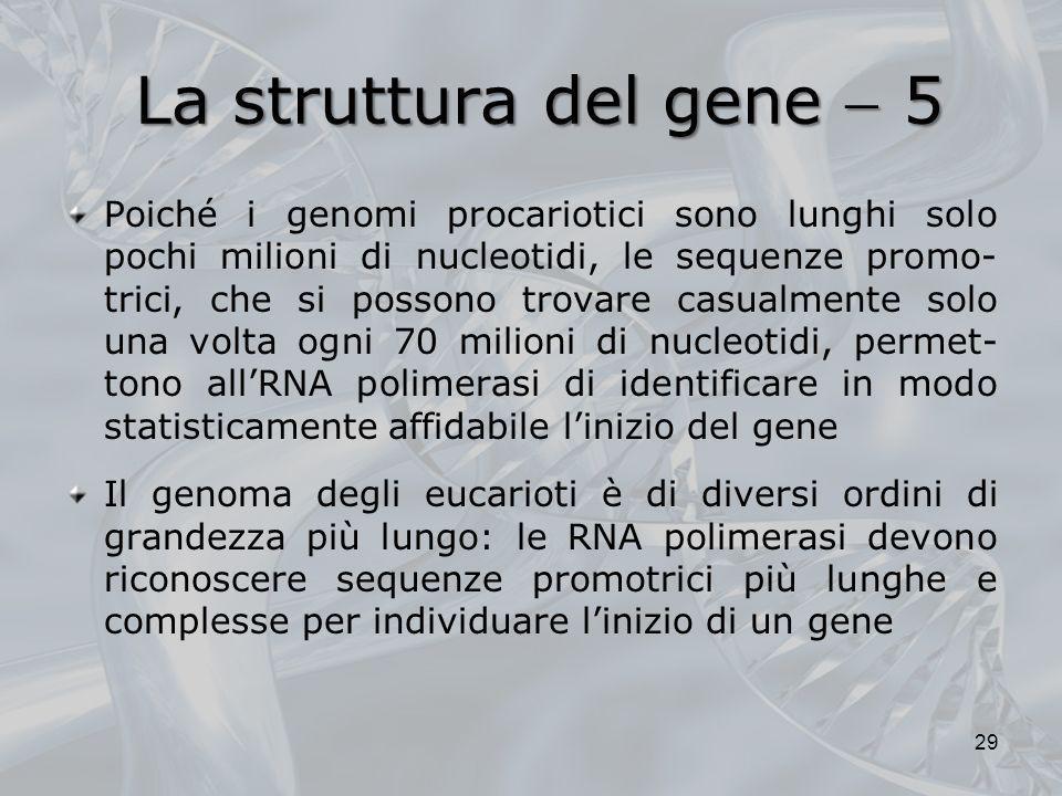 La struttura del gene 5 Poiché i genomi procariotici sono lunghi solo pochi milioni di nucleotidi, le sequenze promo- trici, che si possono trovare ca