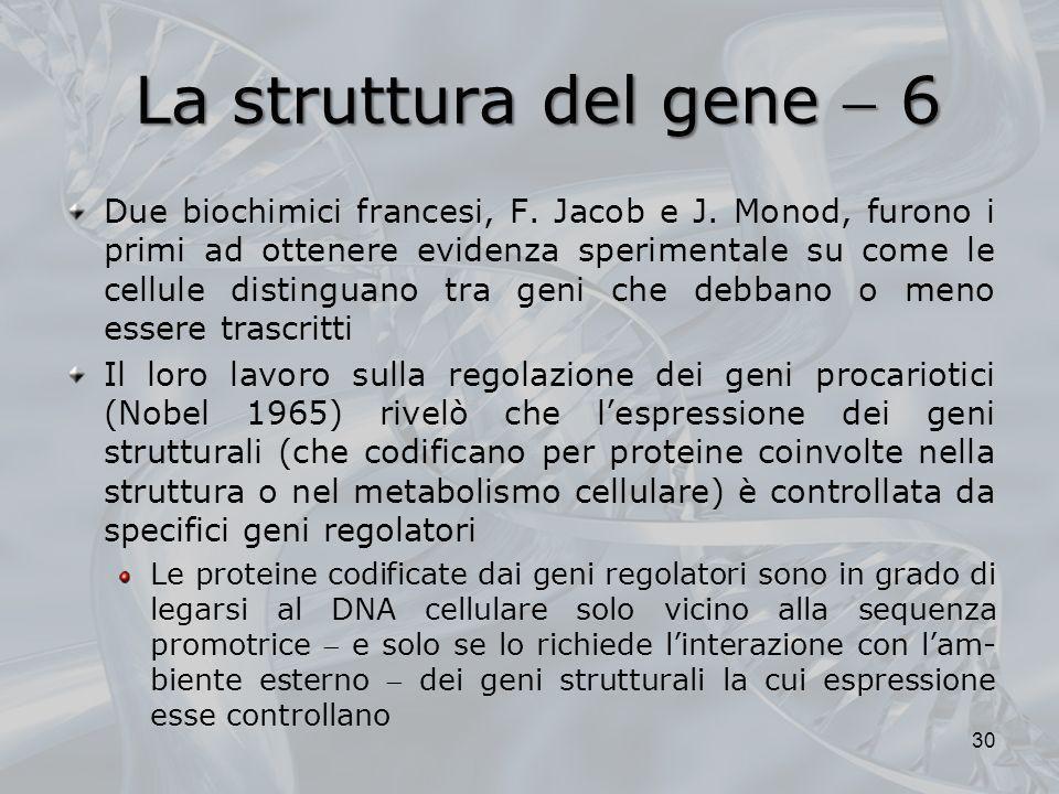 La struttura del gene 6 Due biochimici francesi, F. Jacob e J. Monod, furono i primi ad ottenere evidenza sperimentale su come le cellule distinguano