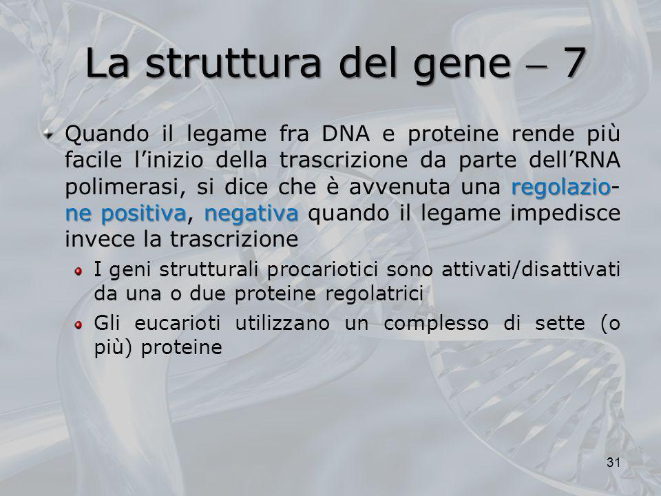 La struttura del gene 7 regolazio ne positivanegativa Quando il legame fra DNA e proteine rende più facile linizio della trascrizione da parte dellRNA