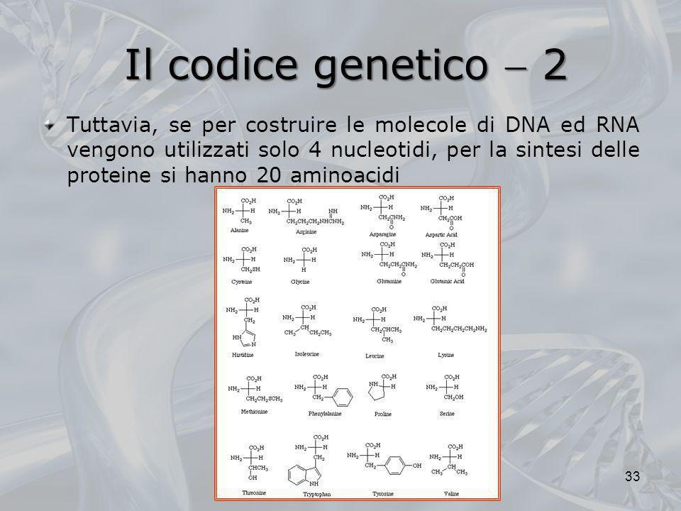 Il codice genetico 2 Tuttavia, se per costruire le molecole di DNA ed RNA vengono utilizzati solo 4 nucleotidi, per la sintesi delle proteine si hanno