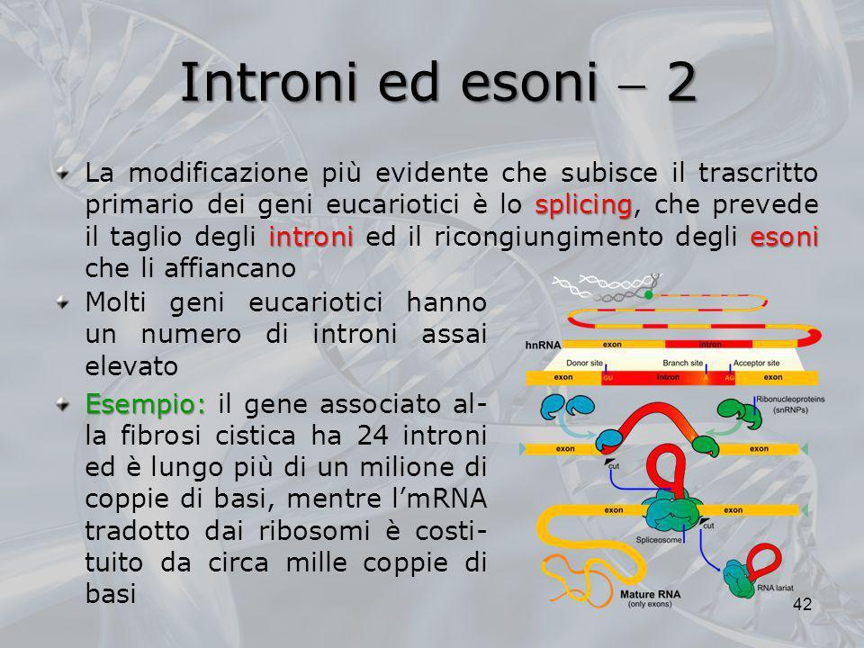 Introni ed esoni 2 Molti geni eucariotici hanno un numero di introni assai elevato Esempio: Esempio: il gene associato al- la fibrosi cistica ha 24 in