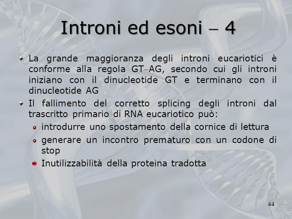 Introni ed esoni 4 La grande maggioranza degli introni eucariotici è conforme alla regola GTAG, secondo cui gli introni iniziano con il dinucleotide G