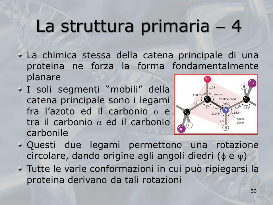 La chimica stessa della catena principale di una proteina ne forza la forma fondamentalmente planare Questi due legami permettono una rotazione circol