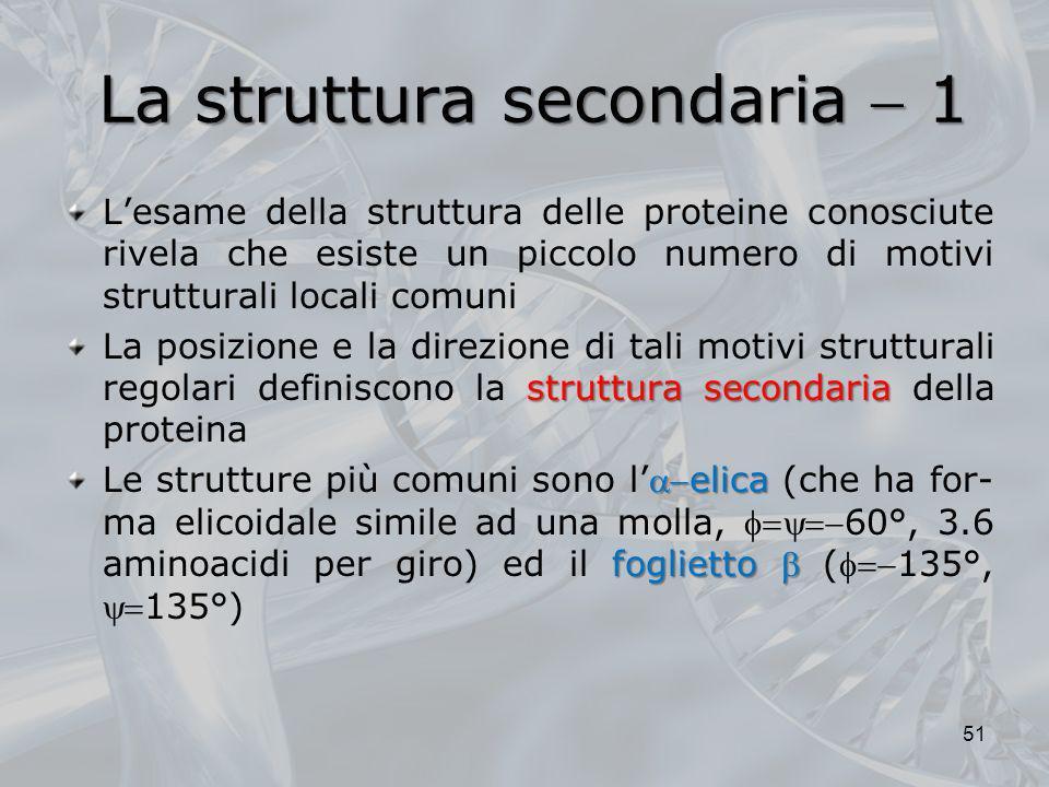 La struttura secondaria 1 Lesame della struttura delle proteine conosciute rivela che esiste un piccolo numero di motivi strutturali locali comuni str