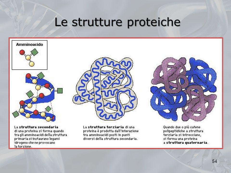 Le strutture proteiche 54