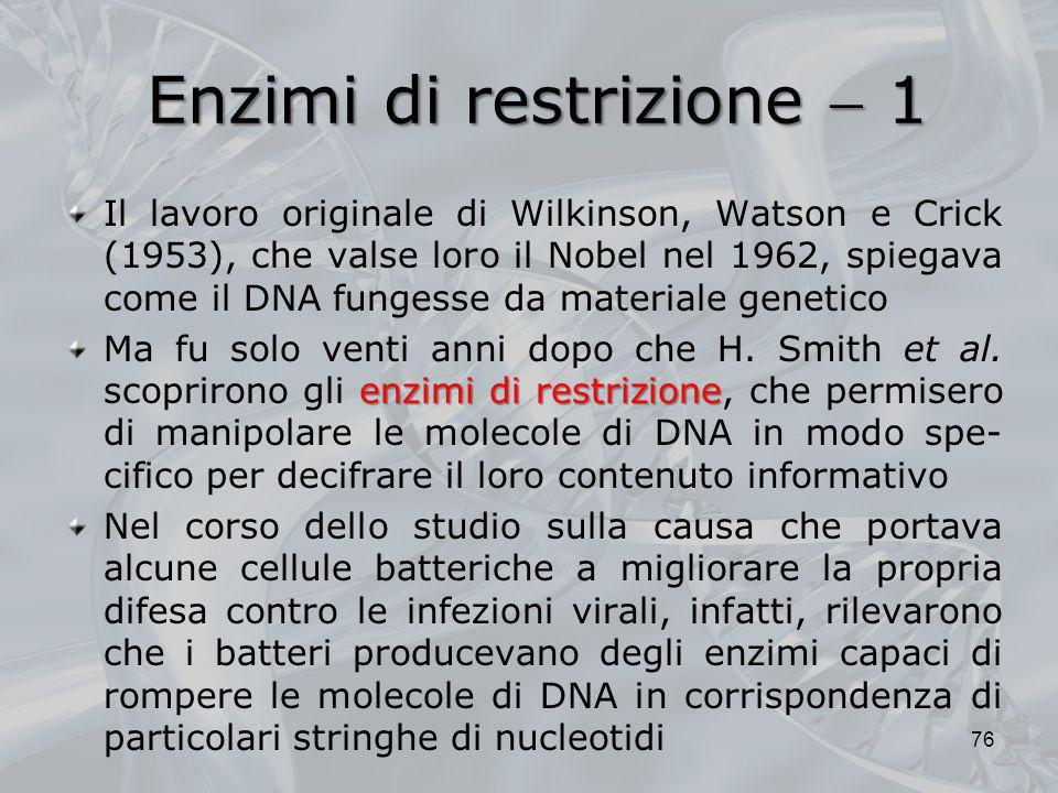 Enzimi di restrizione 1 Il lavoro originale di Wilkinson, Watson e Crick (1953), che valse loro il Nobel nel 1962, spiegava come il DNA fungesse da ma