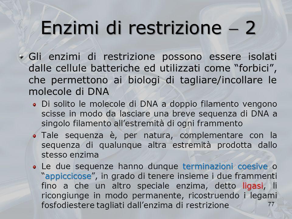 Enzimi di restrizione 2 Gli enzimi di restrizione possono essere isolati dalle cellule batteriche ed utilizzati come forbici, che permettono ai biolog