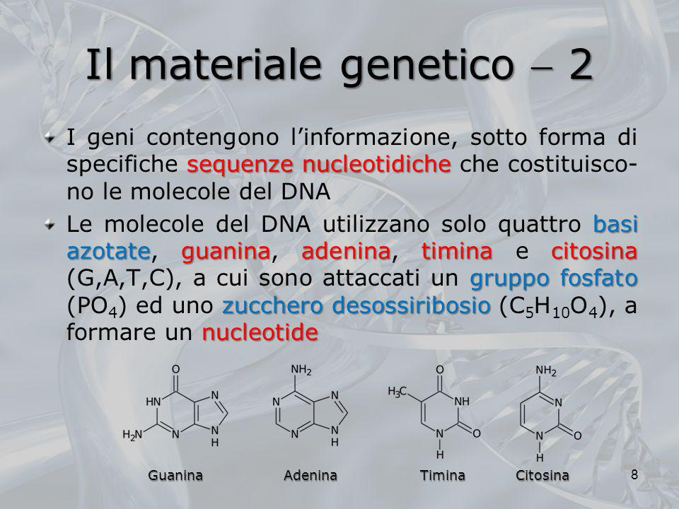 Il materiale genetico 2 sequenze nucleotidiche I geni contengono linformazione, sotto forma di specifiche sequenze nucleotidiche che costituisco- no l
