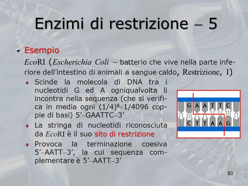 Enzimi di restrizione 5 Scinde la molecola di DNA tra i nucleotidi G ed A ogniqualvolta li incontra nella sequenza (che si verifi- ca in media ogni (1