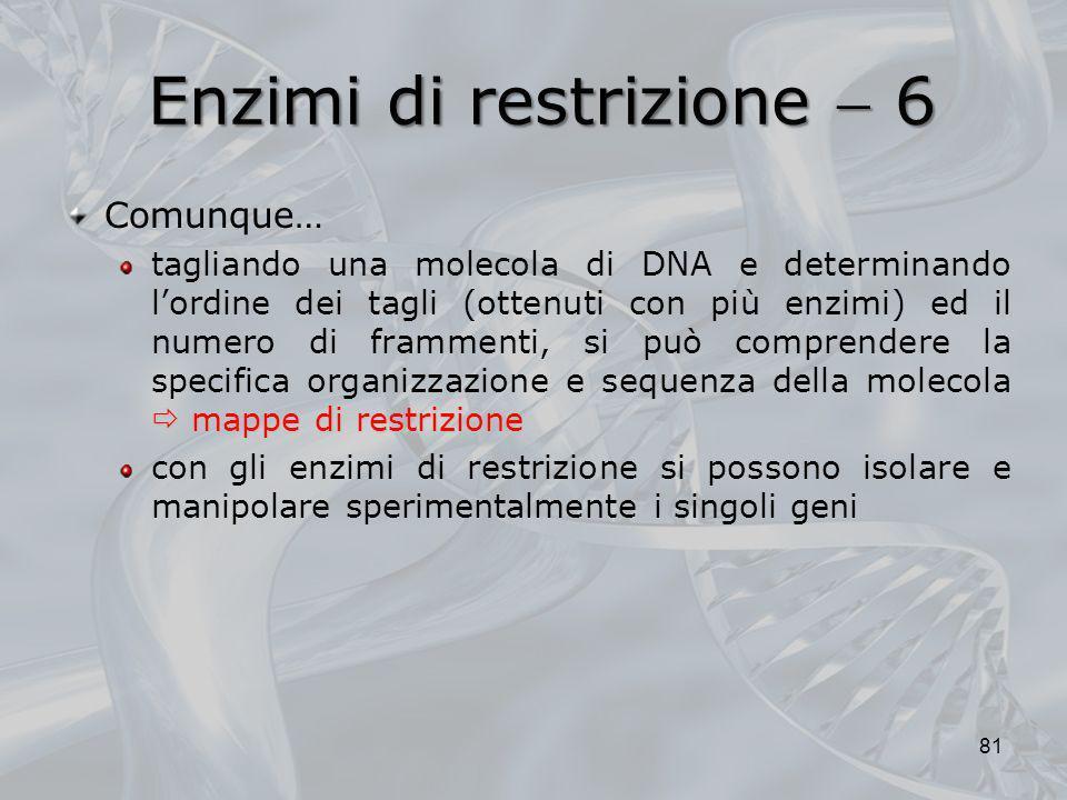 Enzimi di restrizione 6 Comunque… mappe di restrizione tagliando una molecola di DNA e determinando lordine dei tagli (ottenuti con più enzimi) ed il
