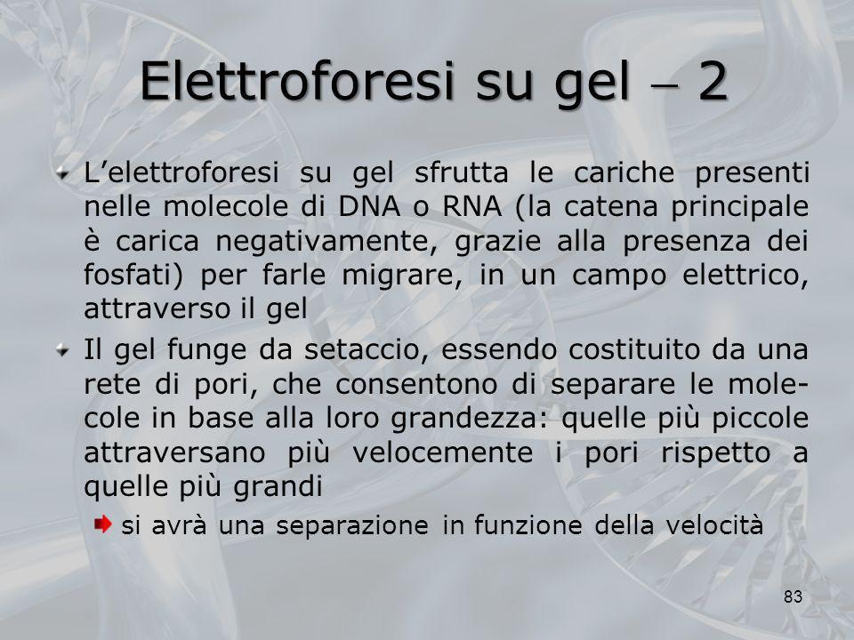 Elettroforesi su gel 2 Lelettroforesi su gel sfrutta le cariche presenti nelle molecole di DNA o RNA (la catena principale è carica negativamente, gra