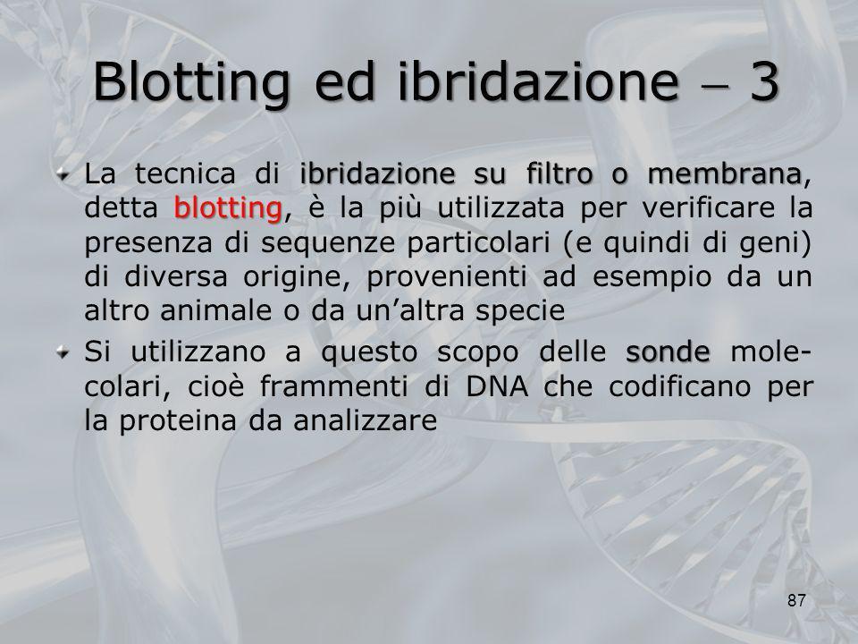 Blotting ed ibridazione 3 ibridazione su filtro o membrana blotting La tecnica di ibridazione su filtro o membrana, detta blotting, è la più utilizzat