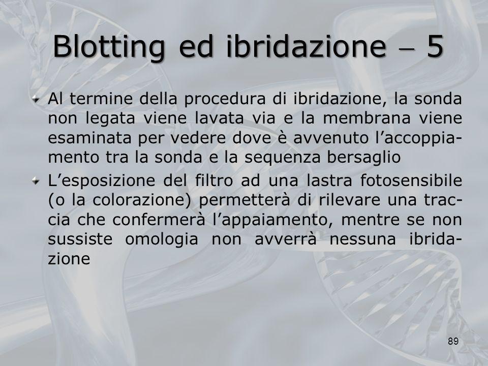 Blotting ed ibridazione 5 Al termine della procedura di ibridazione, la sonda non legata viene lavata via e la membrana viene esaminata per vedere dov