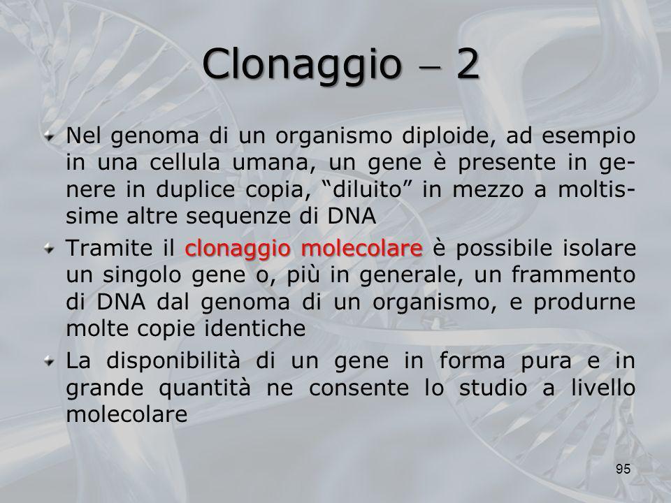 Clonaggio 2 Nel genoma di un organismo diploide, ad esempio in una cellula umana, un gene è presente in ge- nere in duplice copia, diluito in mezzo a