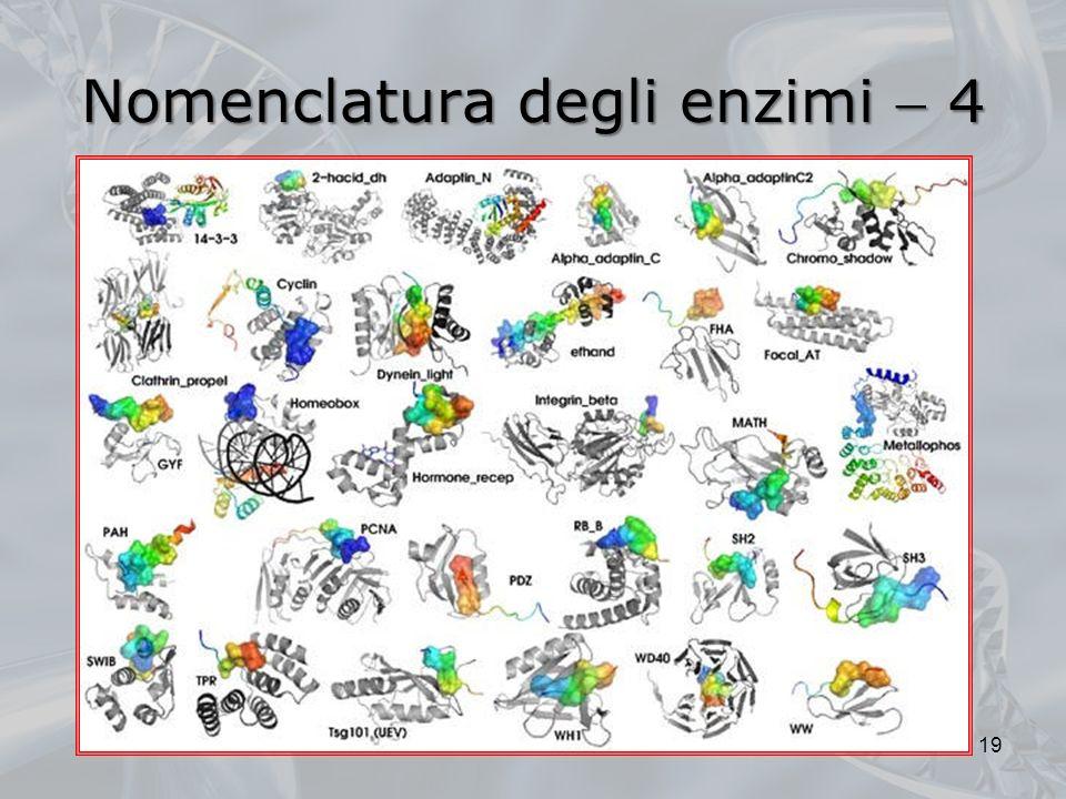 Nomenclatura degli enzimi 4 19
