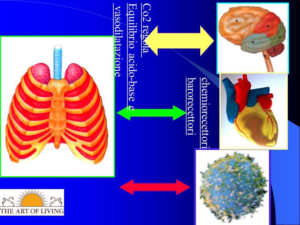 chemiorecettori barorecettori Co2 regola Equilibrio acido-base e vasodilatazione