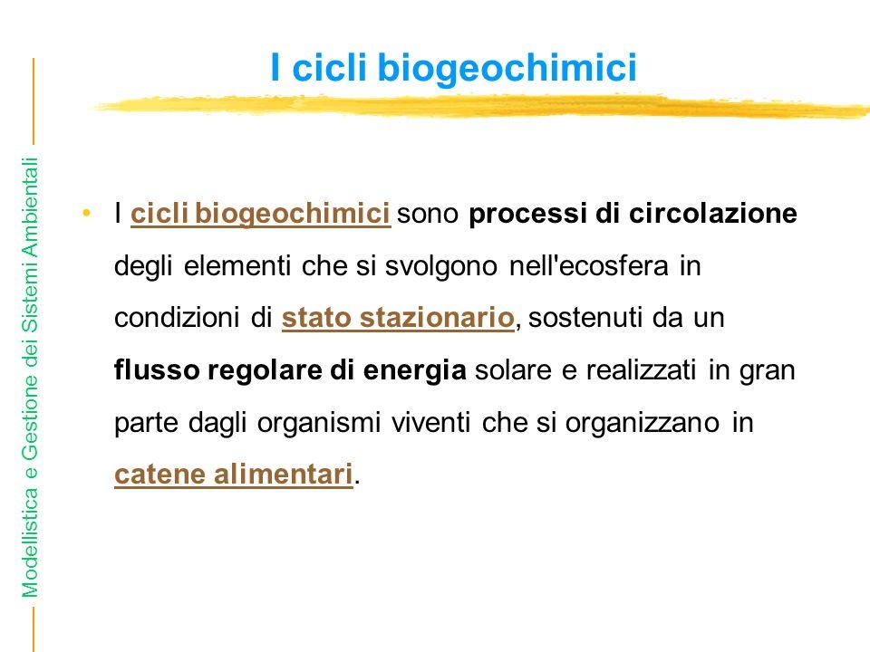 Modellistica e Gestione dei Sistemi Ambientali I cicli biogeochimici I cicli biogeochimici sono processi di circolazione degli elementi che si svolgono nell ecosfera in condizioni di stato stazionario, sostenuti da un flusso regolare di energia solare e realizzati in gran parte dagli organismi viventi che si organizzano in catene alimentari.cicli biogeochimicistato stazionario catene alimentari
